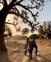 Promenade dans la savane pour voir des hyènes