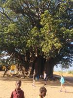 Le plus gros baobab du Sénégal