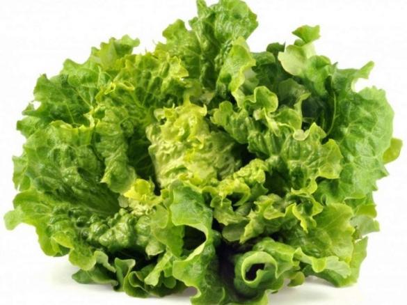 Salade verte par maxencev une recette de fan retrouver for Eliminer les vers des salades