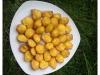 Madeleines à l'ananas