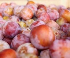 Compote pommes mirabelles pour bébé