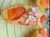 Abricotine ou oranais aux abricots