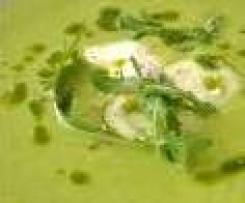 Velouté de courgette au gingembre
