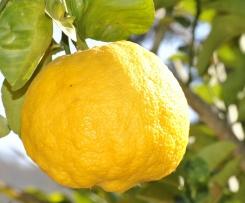 Lemon Curd - Crème au citron Corse
